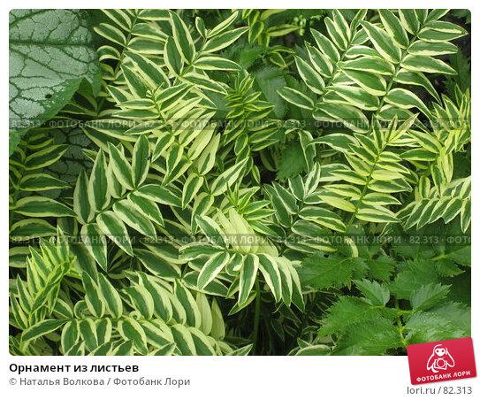 Орнамент из листьев, фото № 82313, снято 20 июля 2007 г. (c) Наталья Волкова / Фотобанк Лори
