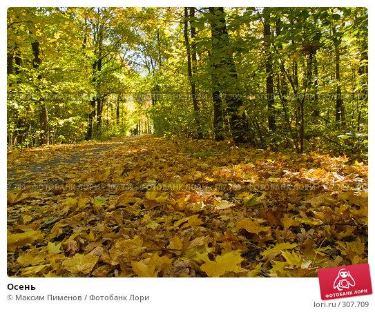 Купить «Осень», фото № 307709, снято 7 октября 2007 г. (c) Максим Пименов / Фотобанк Лори