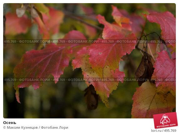 Купить «Осень», фото № 495769, снято 4 октября 2008 г. (c) Максим Кузнецов / Фотобанк Лори