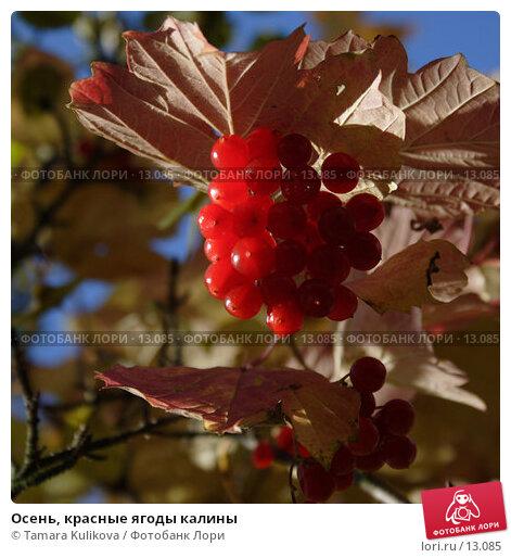 Осень, красные ягоды калины, фото № 13085, снято 19 ноября 2006 г. (c) Tamara Kulikova / Фотобанк Лори
