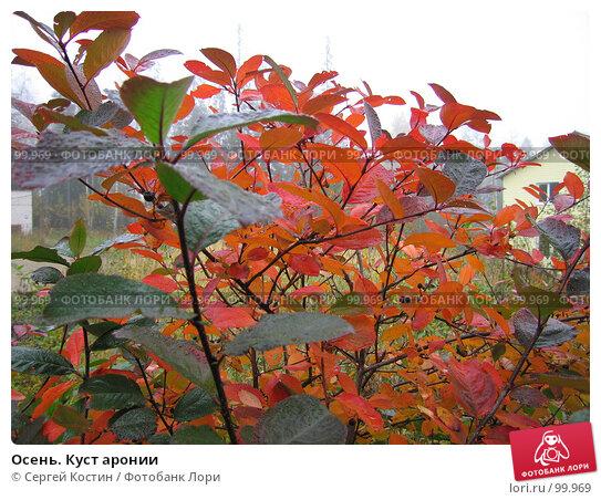 Осень. Куст аронии, фото № 99969, снято 30 сентября 2007 г. (c) Сергей Костин / Фотобанк Лори