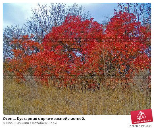 Осень. Кустарник с ярко-красной листвой., фото № 195833, снято 13 ноября 2004 г. (c) Иван Сазыкин / Фотобанк Лори