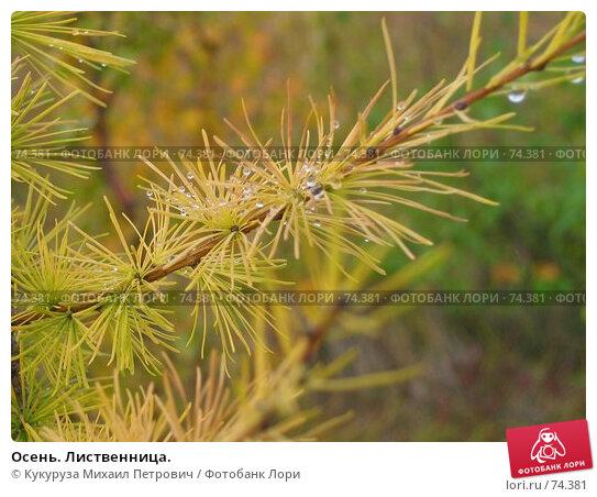 Осень. Лиственница., фото № 74381, снято 29 августа 2005 г. (c) Кукуруза Михаил Петрович / Фотобанк Лори
