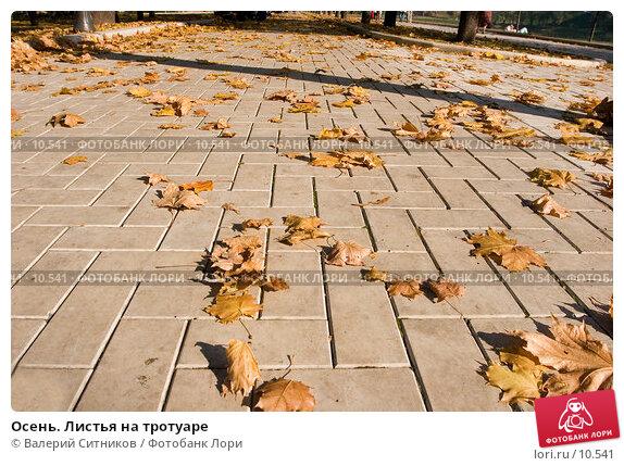 Осень. Листья на тротуаре, фото № 10541, снято 2 октября 2005 г. (c) Валерий Ситников / Фотобанк Лори