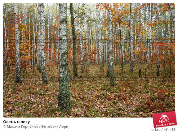 Осень в лесу, фото № 141433, снято 20 октября 2005 г. (c) Максим Горпенюк / Фотобанк Лори