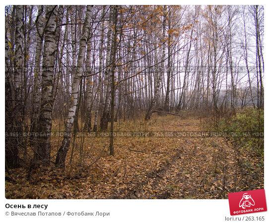Осень в лесу, фото № 263165, снято 29 октября 2007 г. (c) Вячеслав Потапов / Фотобанк Лори