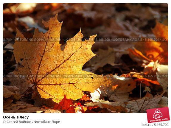 Осень в лесу. Стоковое фото, фотограф Сергей Войнов / Фотобанк Лори