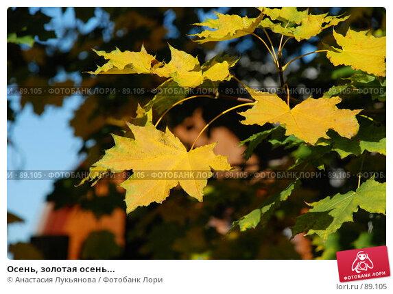 Осень, золотая осень..., фото № 89105, снято 21 сентября 2007 г. (c) Анастасия Лукьянова / Фотобанк Лори