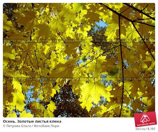 Осень. Золотые листья клена, фото № 8181, снято 11 октября 2005 г. (c) Петрова Ольга / Фотобанк Лори