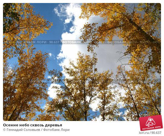 Осенне небо сквозь деревья, фото № 90637, снято 29 сентября 2007 г. (c) Геннадий Соловьев / Фотобанк Лори
