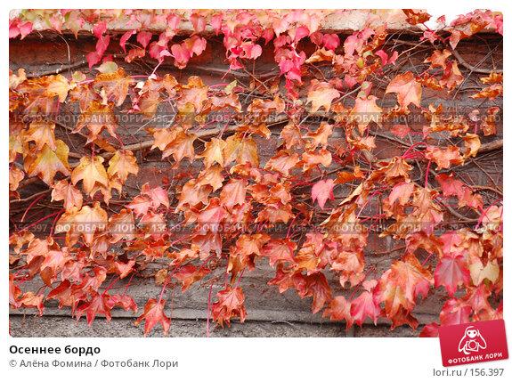 Осеннее бордо, фото № 156397, снято 11 ноября 2007 г. (c) Алёна Фомина / Фотобанк Лори