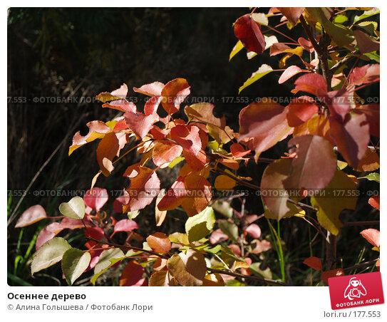 Осеннее дерево, эксклюзивное фото № 177553, снято 22 сентября 2007 г. (c) Алина Голышева / Фотобанк Лори