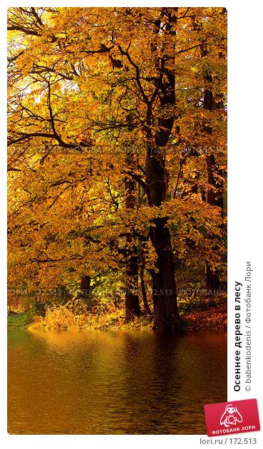 Осеннее дерево в лесу, фото № 172513, снято 30 сентября 2005 г. (c) Бабенко Денис Юрьевич / Фотобанк Лори