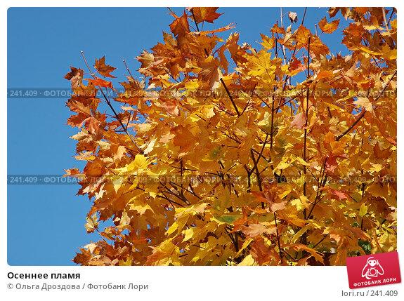 Купить «Осеннее пламя», фото № 241409, снято 6 июня 2004 г. (c) Ольга Дроздова / Фотобанк Лори