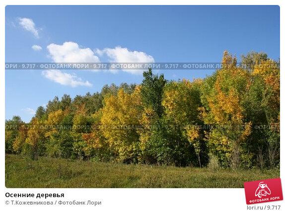 Купить «Осенние деревья», фото № 9717, снято 24 мая 2018 г. (c) Т.Кожевникова / Фотобанк Лори
