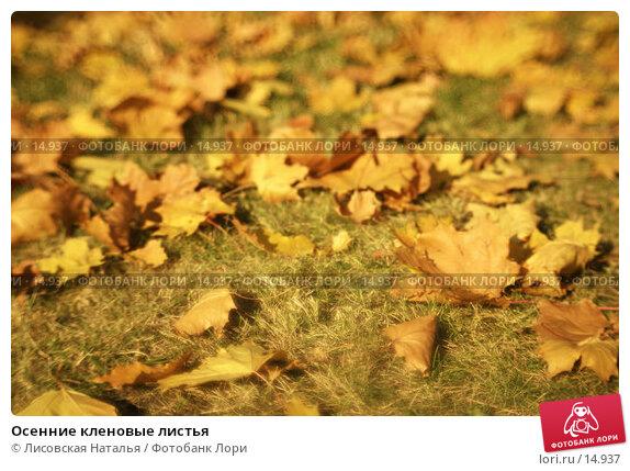 Осенние кленовые листья, фото № 14937, снято 2 октября 2005 г. (c) Лисовская Наталья / Фотобанк Лори