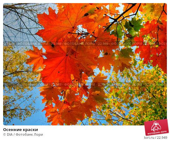 Осенние краски, фото № 22949, снято 18 января 2017 г. (c) DIA / Фотобанк Лори