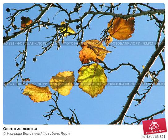 Купить «Осенние листья», фото № 83821, снято 17 октября 2006 г. (c) Надежда Болотина / Фотобанк Лори
