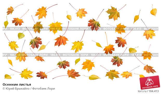 Осенние листья, фото № 184413, снято 24 октября 2007 г. (c) Юрий Брыкайло / Фотобанк Лори