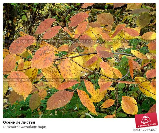 Купить «Осенние листья», фото № 216689, снято 24 марта 2018 г. (c) ElenArt / Фотобанк Лори