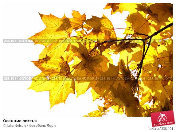 Осенние листья, фото № 238101, снято 23 сентября 2007 г. (c) Julia Nelson / Фотобанк Лори
