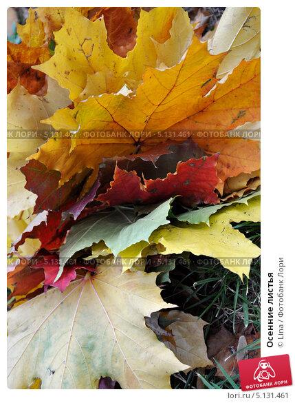 Осенние листья. Стоковое фото, фотограф Lina / Фотобанк Лори