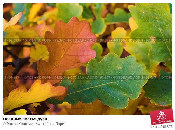 Осенние листья дуба, фото № 98397, снято 29 сентября 2007 г. (c) Роман Коротаев / Фотобанк Лори
