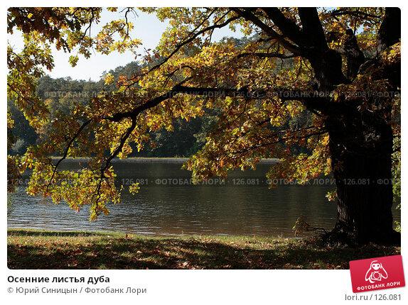 Купить «Осенние листья дуба», фото № 126081, снято 22 сентября 2007 г. (c) Юрий Синицын / Фотобанк Лори