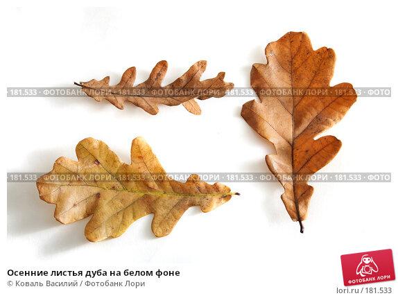 Осенние листья дуба на белом фоне, фото № 181533, снято 18 октября 2006 г. (c) Коваль Василий / Фотобанк Лори