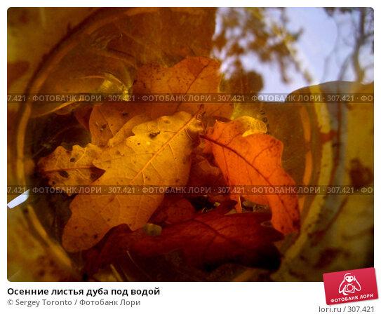 Осенние листья дуба под водой, фото № 307421, снято 27 октября 2007 г. (c) Sergey Toronto / Фотобанк Лори