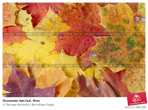Осенние листья. Фон, фото № 299329, снято 5 октября 2007 г. (c) Литова Наталья / Фотобанк Лори