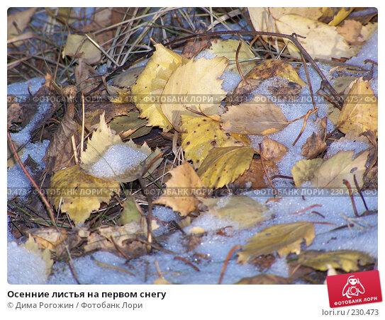 Осенние листья на первом снегу, фото № 230473, снято 22 октября 2006 г. (c) Дима Рогожин / Фотобанк Лори