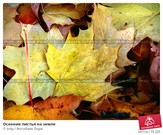 Осенние листья на земле, фото № 19325, снято 20 января 2017 г. (c) only / Фотобанк Лори