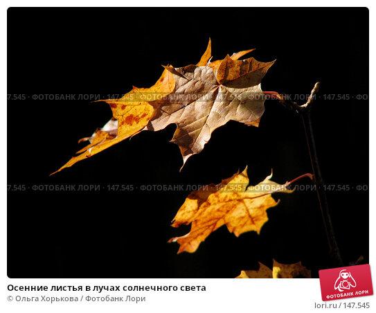 Осенние листья в лучах солнечного света, фото № 147545, снято 24 сентября 2006 г. (c) Ольга Хорькова / Фотобанк Лори