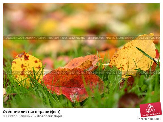 Купить «Осенние листья в траве (фон)», фото № 100305, снято 14 декабря 2017 г. (c) Виктор Савушкин / Фотобанк Лори