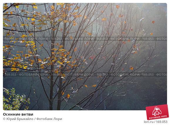 Осенние ветви, фото № 169053, снято 2 октября 2007 г. (c) Юрий Брыкайло / Фотобанк Лори