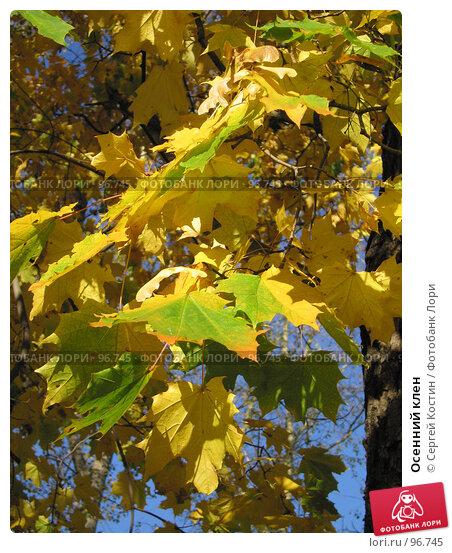 Осенний клен, фото № 96745, снято 2 октября 2005 г. (c) Сергей Костин / Фотобанк Лори