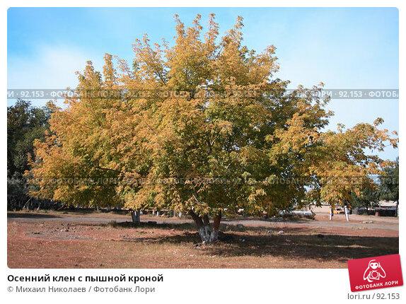 Осенний клен с пышной кроной, фото № 92153, снято 24 сентября 2007 г. (c) Михаил Николаев / Фотобанк Лори