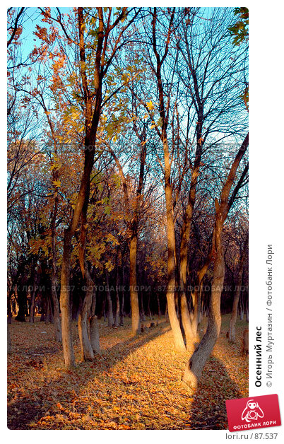 Осенний лес, фото № 87537, снято 1 января 2004 г. (c) Игорь Муртазин / Фотобанк Лори