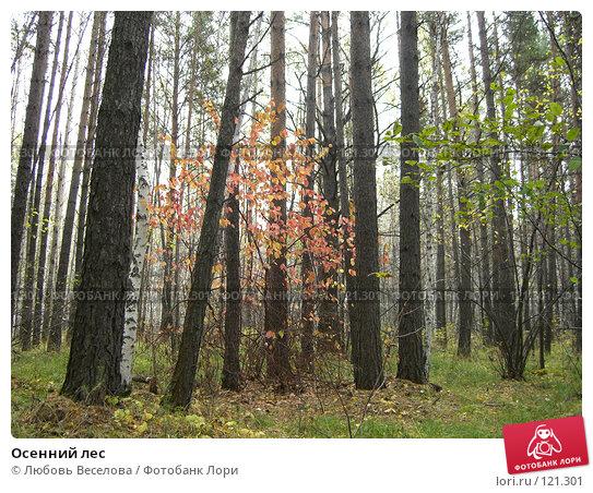 Осенний лес, фото № 121301, снято 26 сентября 2007 г. (c) Любовь Веселова / Фотобанк Лори