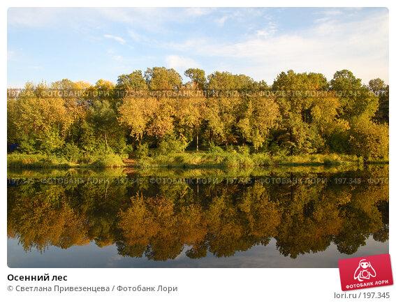Осенний лес, фото № 197345, снято 27 мая 2017 г. (c) Светлана Привезенцева / Фотобанк Лори