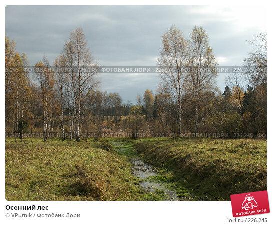 Осенний лес, фото № 226245, снято 8 октября 2005 г. (c) VPutnik / Фотобанк Лори