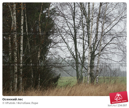 Осенний лес, фото № 234097, снято 5 ноября 2004 г. (c) VPutnik / Фотобанк Лори