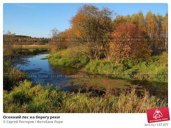 Осенний лес на берегу реки, фото № 137077, снято 22 сентября 2007 г. (c) Сергей Пестерев / Фотобанк Лори