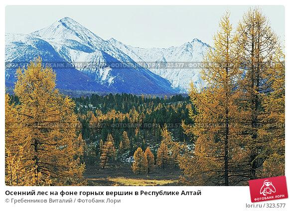 Осенний лес на фоне горных вершин в Республике Алтай, фото № 323577, снято 22 августа 2017 г. (c) Гребенников Виталий / Фотобанк Лори