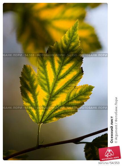 Осенний лист, фото № 54553, снято 9 октября 2005 г. (c) Argument / Фотобанк Лори