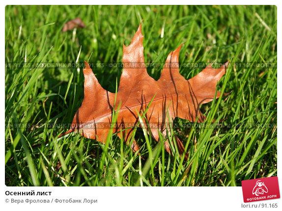 Осенний лист, фото № 91165, снято 30 сентября 2007 г. (c) Вера Фролова / Фотобанк Лори