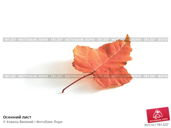 Осенний лист, фото № 181537, снято 18 октября 2006 г. (c) Коваль Василий / Фотобанк Лори