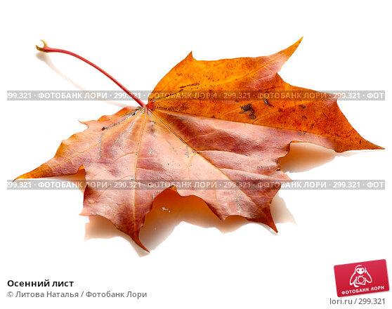 Осенний лист, фото № 299321, снято 20 сентября 2007 г. (c) Литова Наталья / Фотобанк Лори