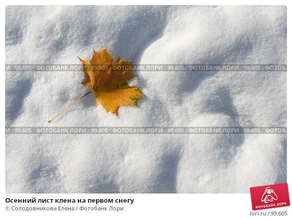 Осенний лист клена на первом снегу, фото № 99605, снято 31 октября 2006 г. (c) Солодовникова Елена / Фотобанк Лори